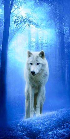 lobo-branco_cosmic