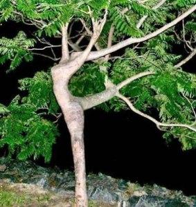 árvore escultura