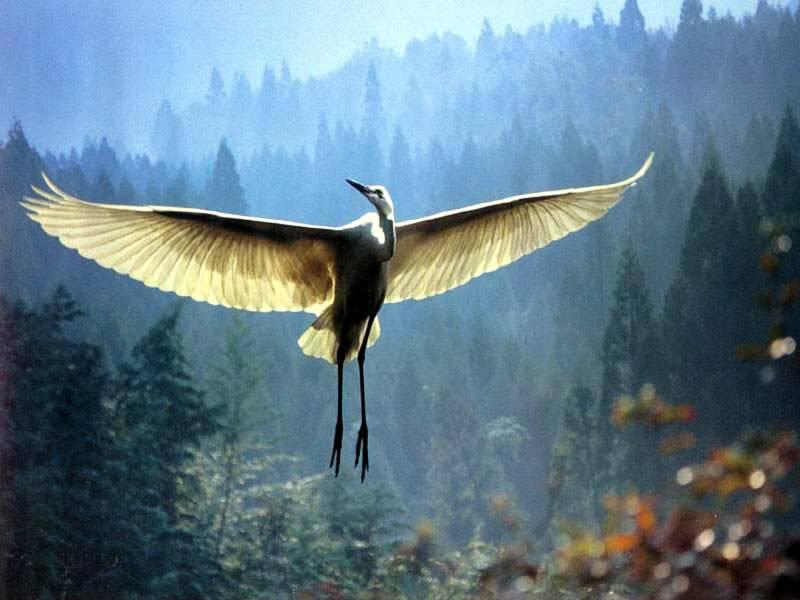 desapego_ave voando