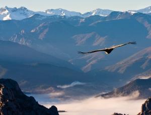 voo da águia_ alto