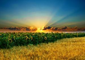 Pôr-do-sol_campo girassol