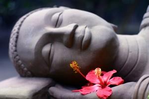 Hibiscus_Buddha