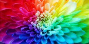 cores_flor