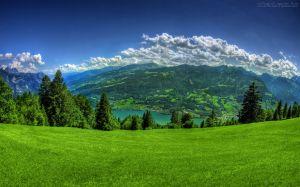 natureza_montanha_pinheiros