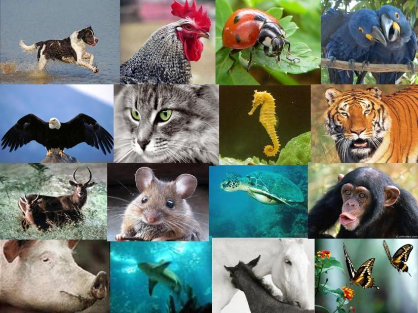 animais_conjunto