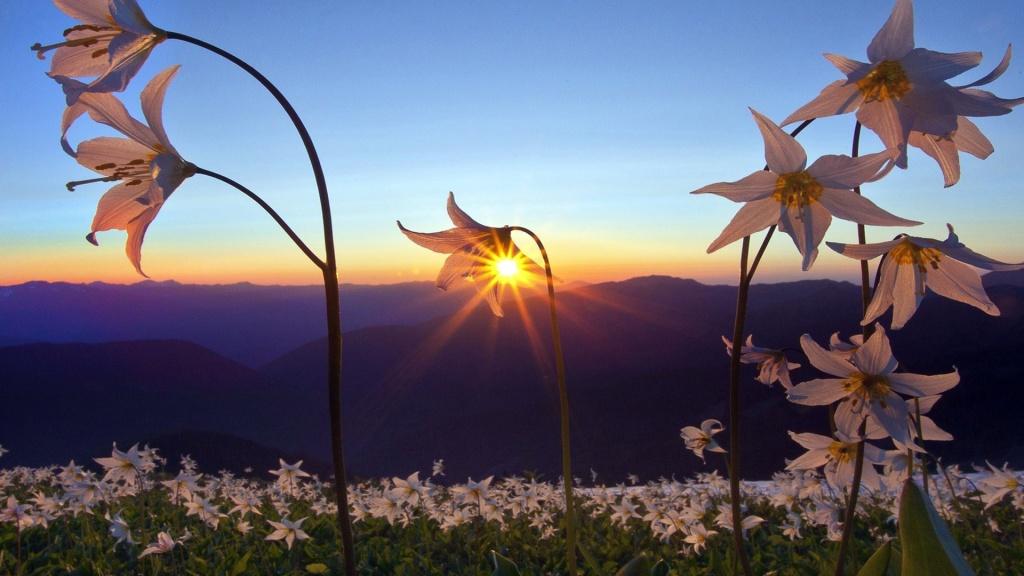 flores sol