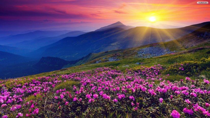 montanha_flores_sol