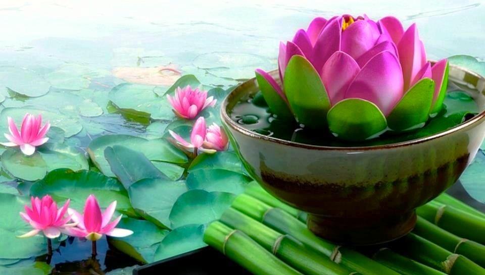 Flor Lótus_Despertar de consciência