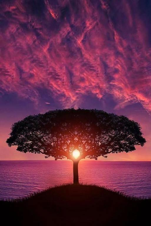 árvore_céu magenta