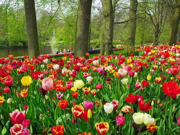 tulipas_primavera